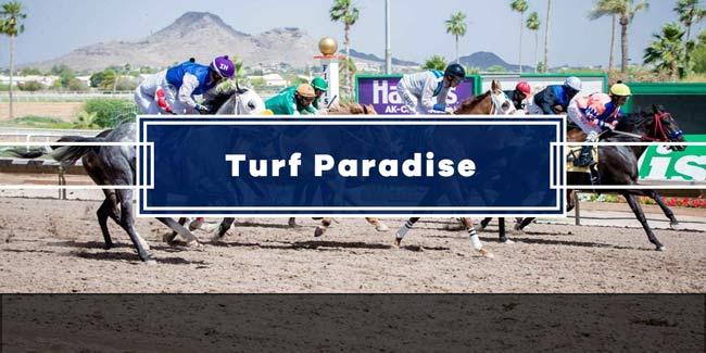 Turf paradise live betting strategies sony six live tv channel online ipl betting