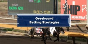 Greyhound Betting Strategies: Tips, System, Hedging